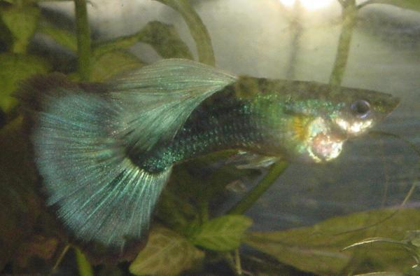 swimmingfish.gif